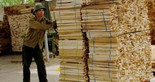 12. Hoạt động sản xuất chế biến gỗ đáp ứng yêu cầu VPA-FLEGT